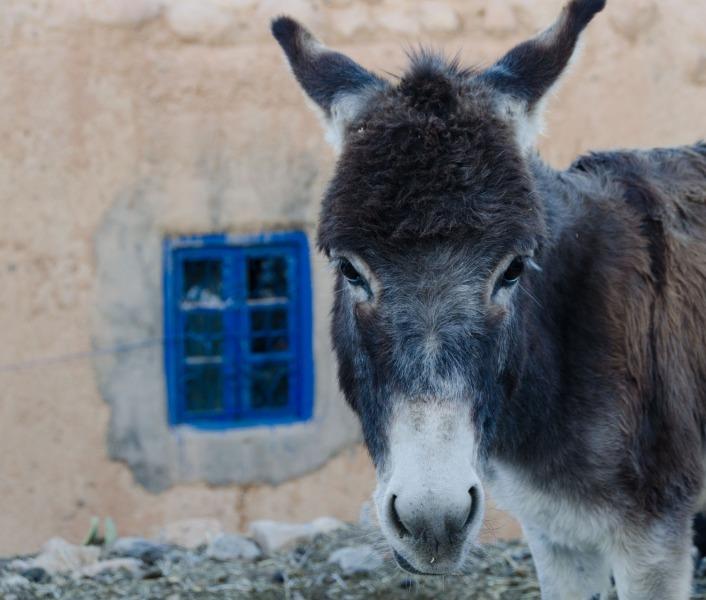 Morocco - Berrem Village of Midelt