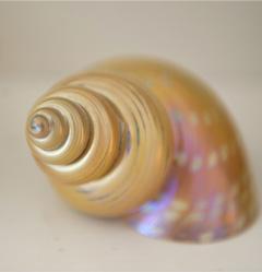 snailshell