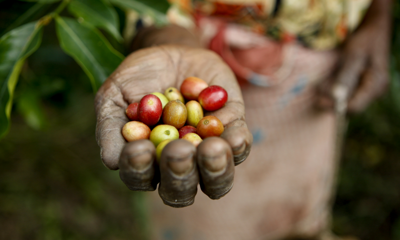 Empowering women coffee producers in Colombia