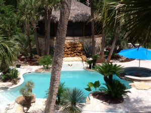 Sego Palm Tree