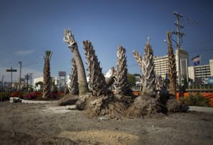 Va. Beach pushes to replace brown palm trees