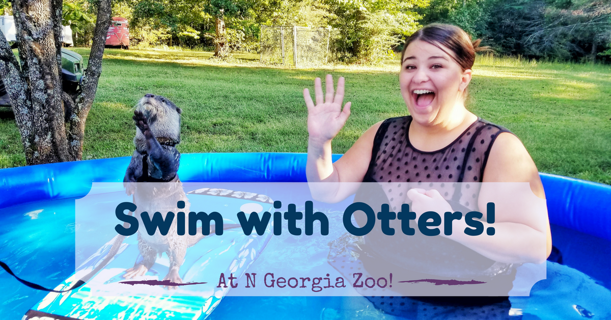 swim with otters otter encounter otter experience play with otters animal encounters wildlife encounters zoos in georgia