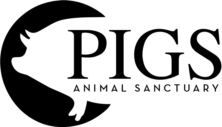PIGS Animal Sanctuary