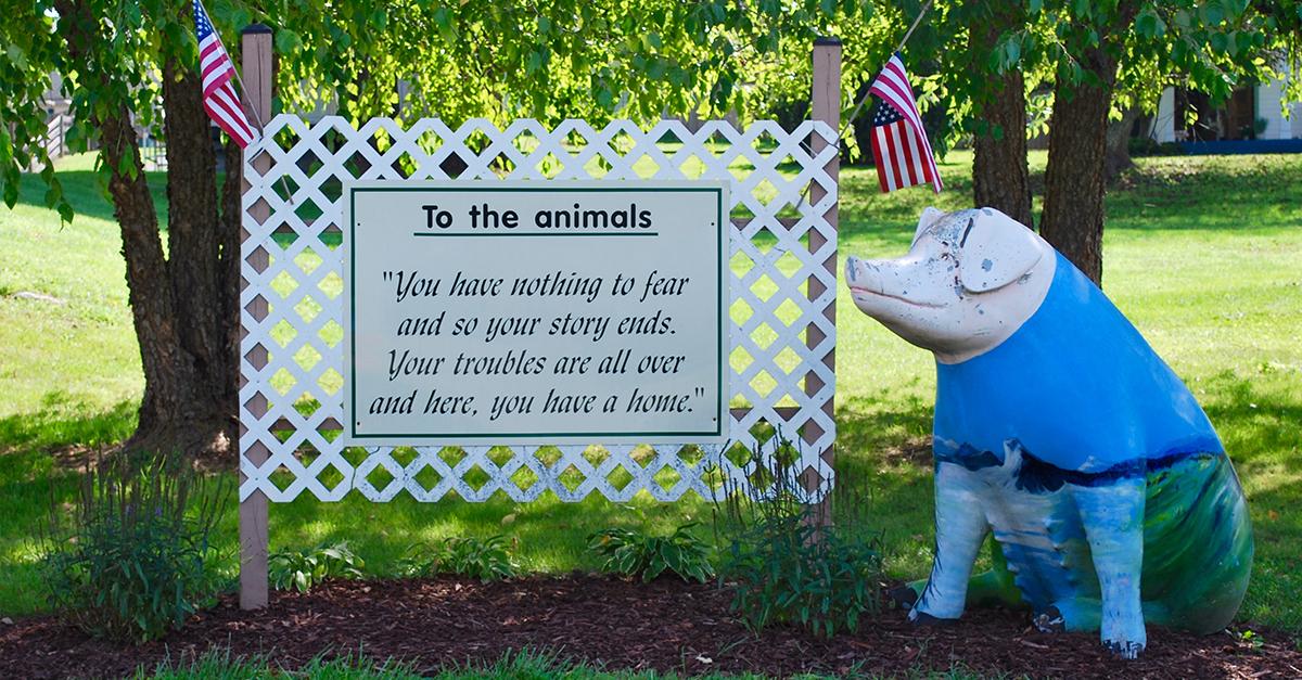 (c) Pigs.org