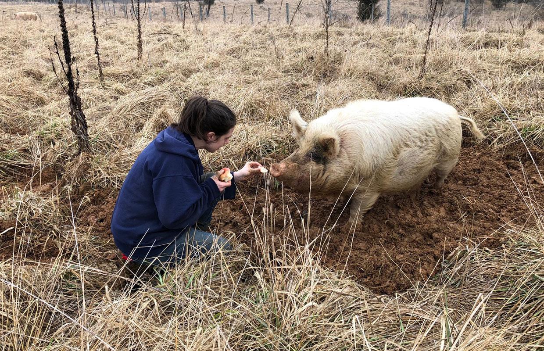 pig-resources-1