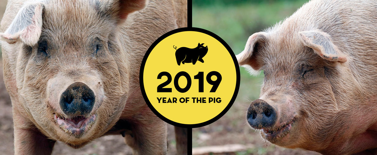 2019-Year-of-the-Pig-Cover4web