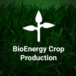 Home-Page_Services_Bio-Energy-Crop-Production_Icon