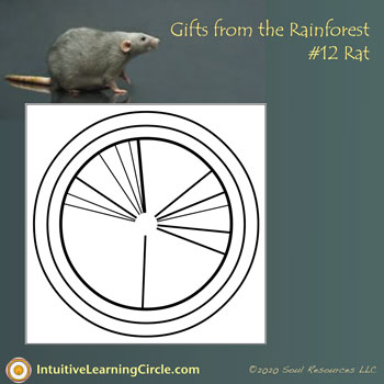 Rat energy from Gifts from the Rainforest