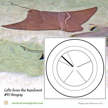 Stingray Medicine - Gifts from the Rainforest