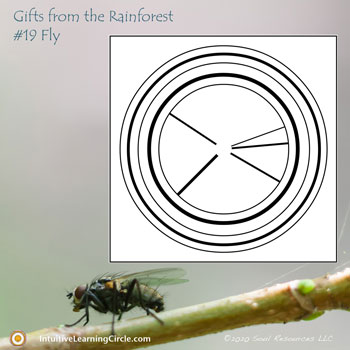 Fly Medicine from Gifts from the Rainforest