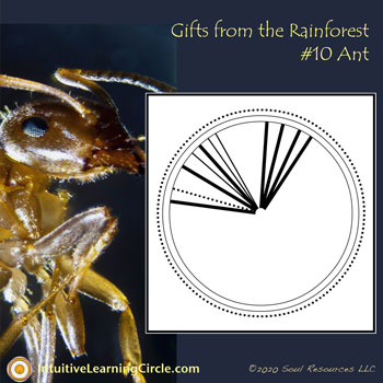 Ant Medicine from Gifts From the Rainforest