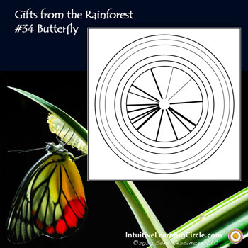 Butterfly Medicine from Gifts from the Rainforest