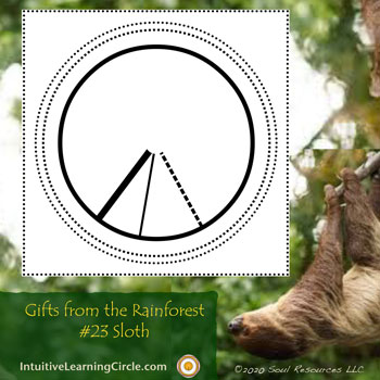 Sloth Medicine from Gifts from the Rainforest