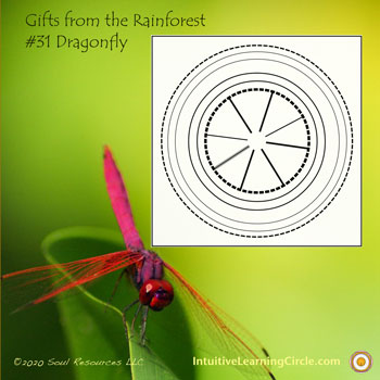 Dragonfly Medicine from Gifts from the Rainforest
