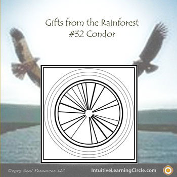 Condor Medicine from Gifts from the Rainforest