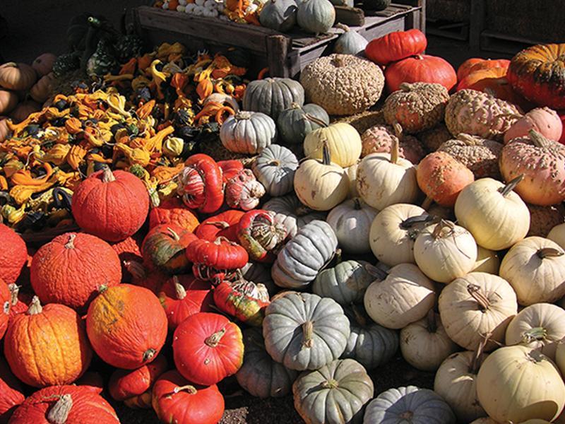 Judy Cole's Pumpkin Pazazz