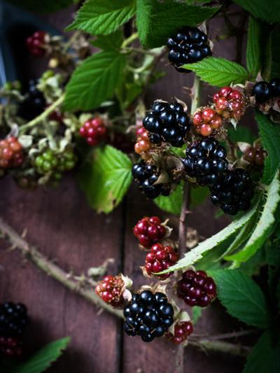 Blackberries, Monika Grabkowska