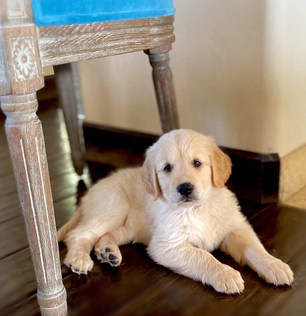 Stevie-Puppy