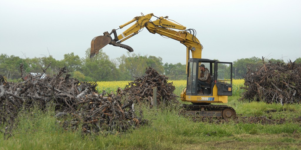 Excavator operator assembled Conservation Burn piles at a Cakebread Cellars vineyard in Rutherford
