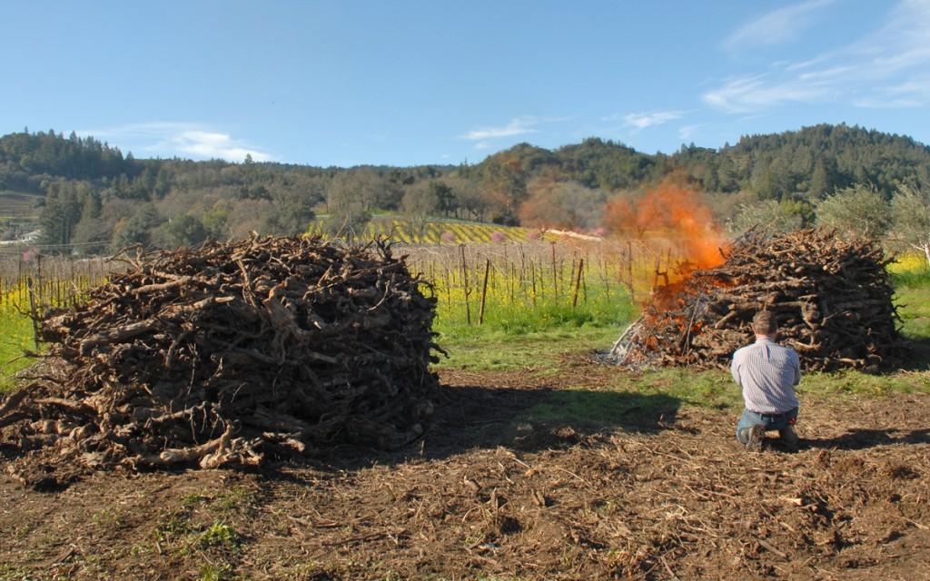 Quivira Vineyards Training