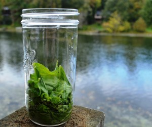 Muddled basil for the Basil Infused Vinegar by the White River