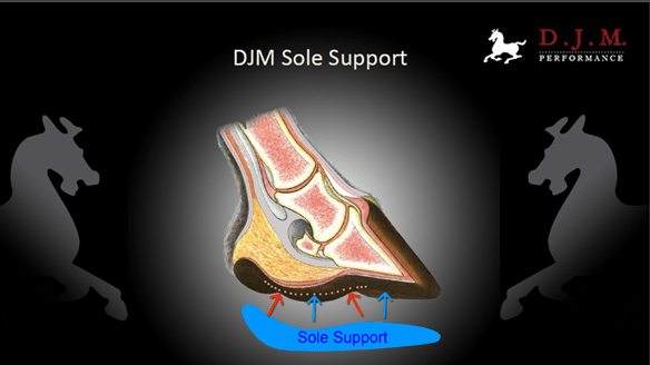 DJM Sole Support Palm Beach Equine CLinic