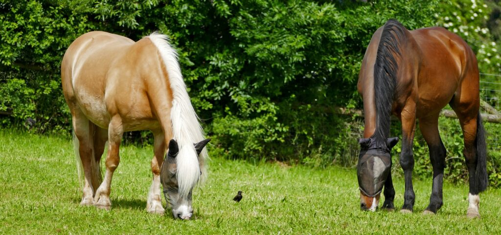 equine sun protection in the summer heat