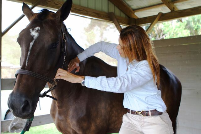 Dr. Natalia Novoa treats an equine patient with chiropractic manipulation.