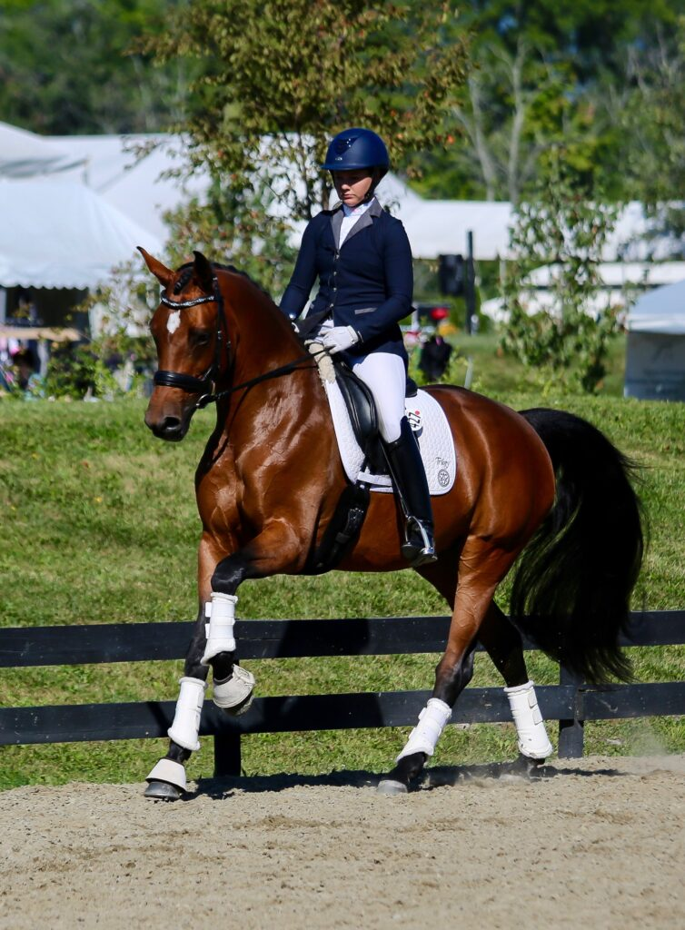 Get Show Ring Ready with Palm Beach Equine Clinic