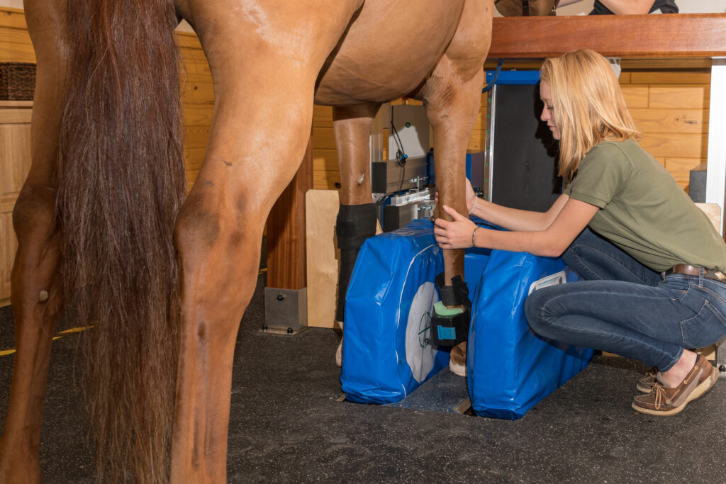 Palm Beach Equine Clinic Veterinary Medical Imaging Technology showcasing a standing magnetic resonance imaging (MRI) unit at hospital