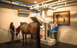 Palm Beach Equine Clinic bone scan nuclear scintigraphy diagnostic imaging