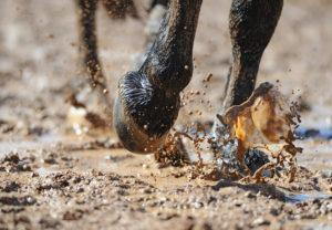 Horse Healthcare: Management of Thrush, Rainrot, and Scratches