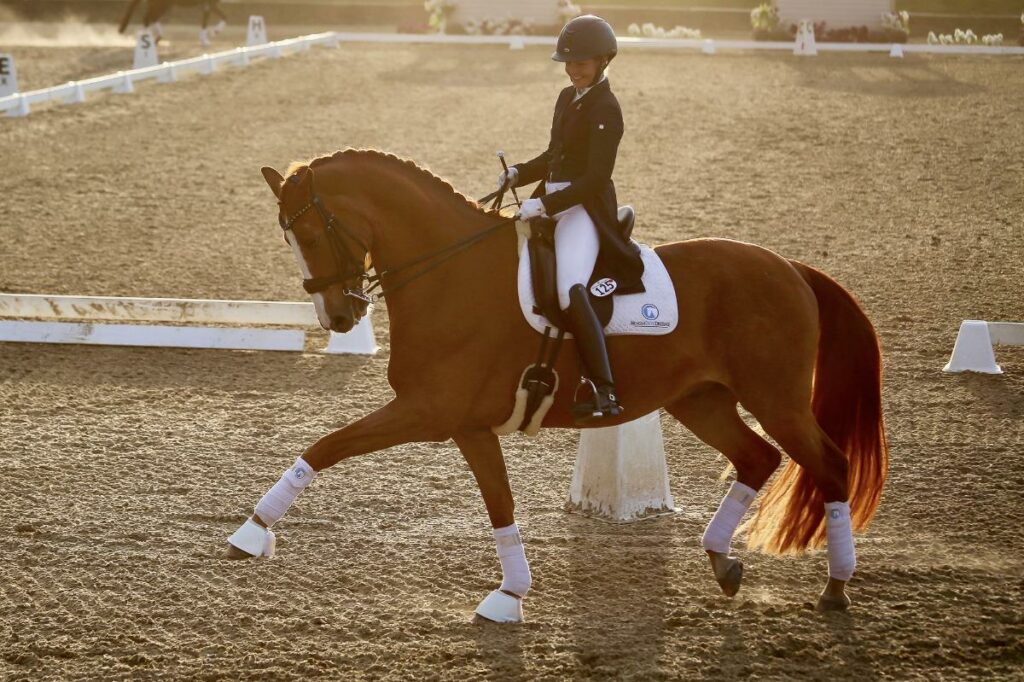 The Road to Grand Prix Glory: Royale is Back in Action Thanks to Palm Beach Equine Clinic