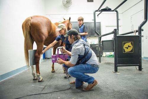 Palm Beach Equine Clinic veterinarian Dr. Santiago Demierre