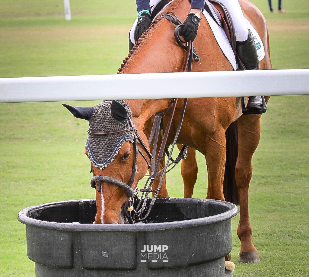horse health hydration palm beach equine clinic