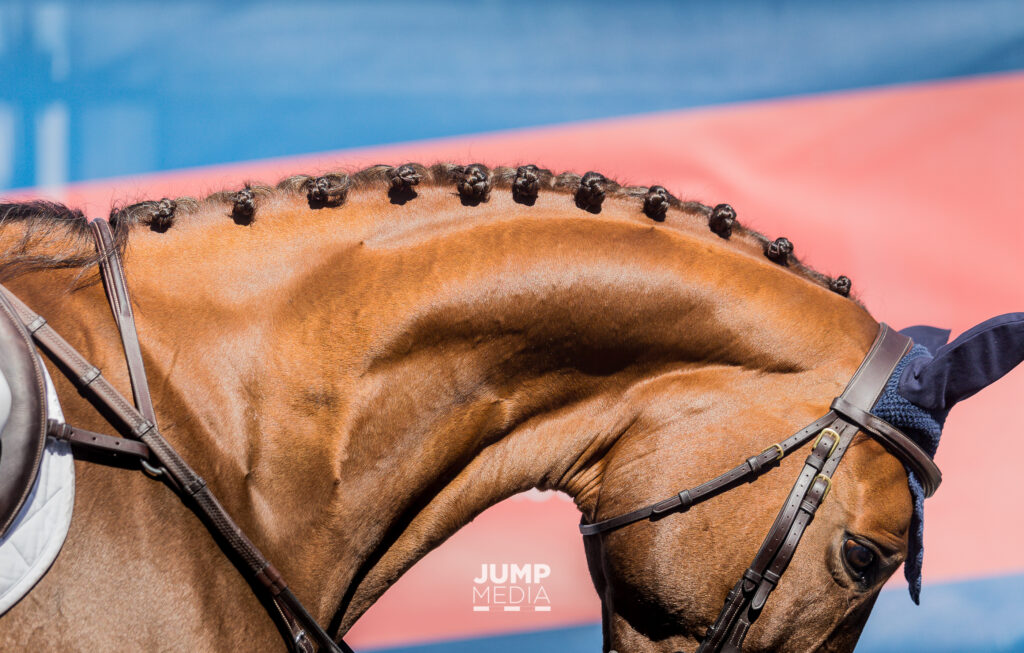 A Link Between Neck Issues and Lameness