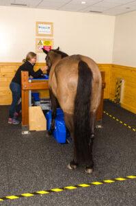 equine standing MRI horse palm beach equine clinic