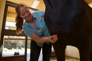 Equine Acupuncture by Palm Beach Equine Clinic Dr. Janet Greenfield-Davis