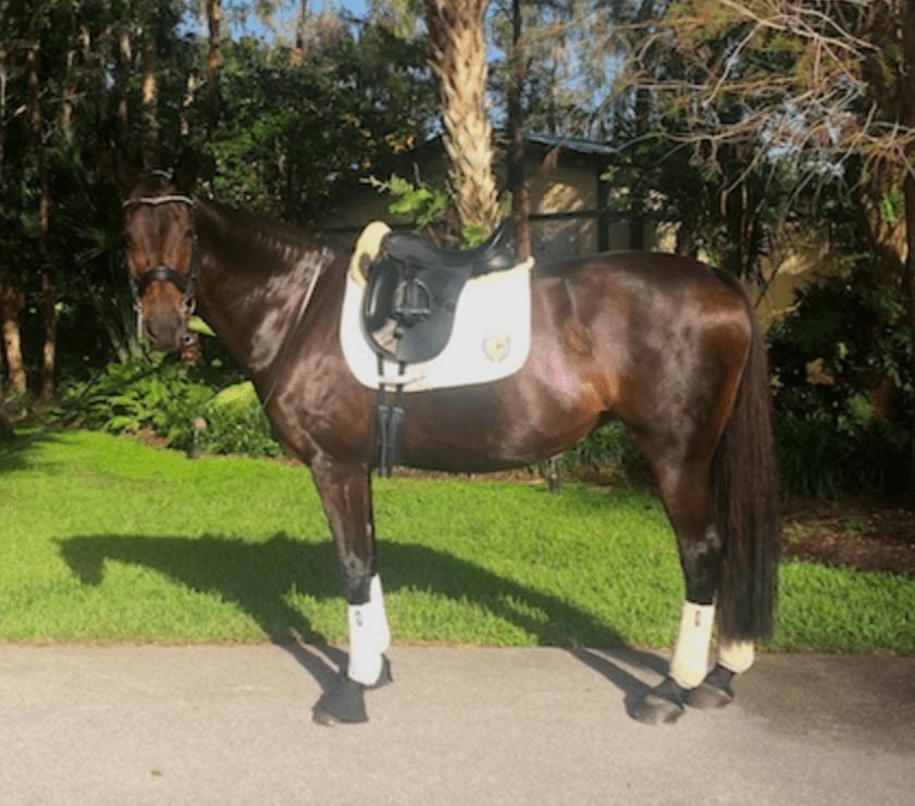 Beatrix success story palm beach equine clinic colic surgery