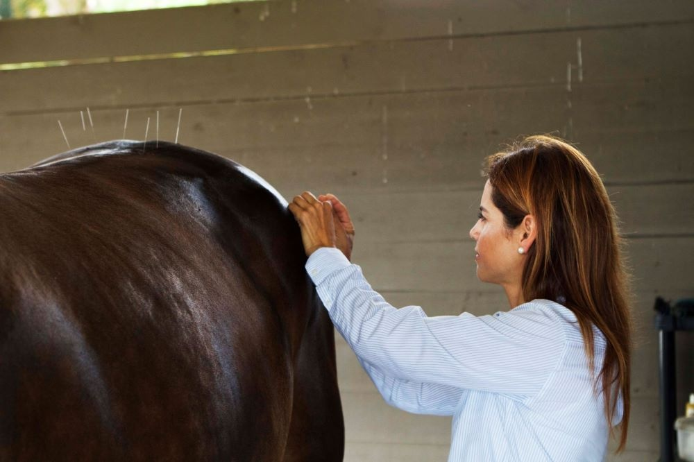 Palm-Beach-Equine-Clinic-Acupuncture-Alternative-Medicine-Therapy-Natalia-Novoa-1