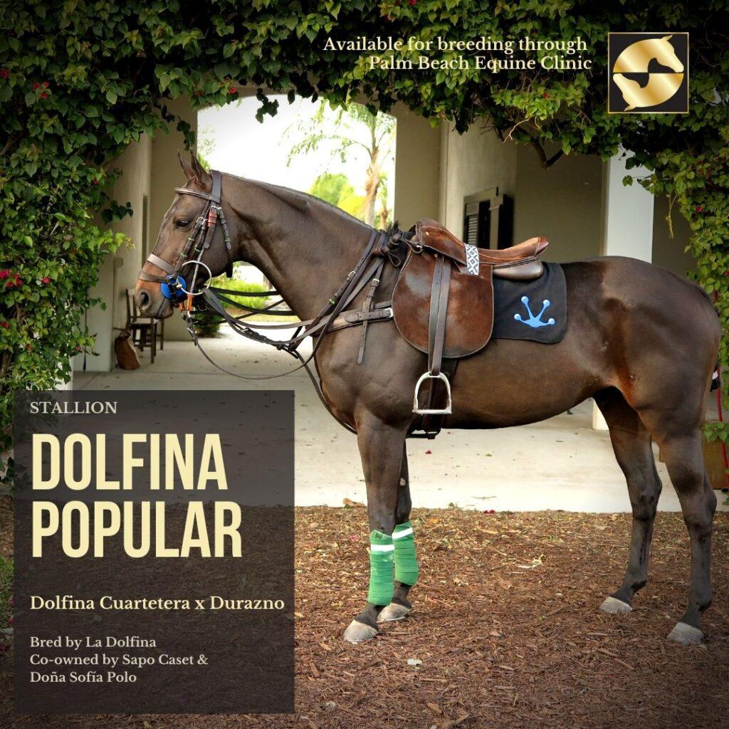 Dolfina Popular Equine Reproduction Breeding Palm Beach Equine Clinic polo pony