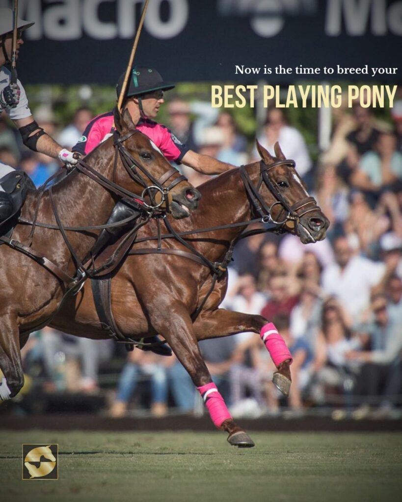 breed best playing polo pony palm beach equine clinic elovero tio mio