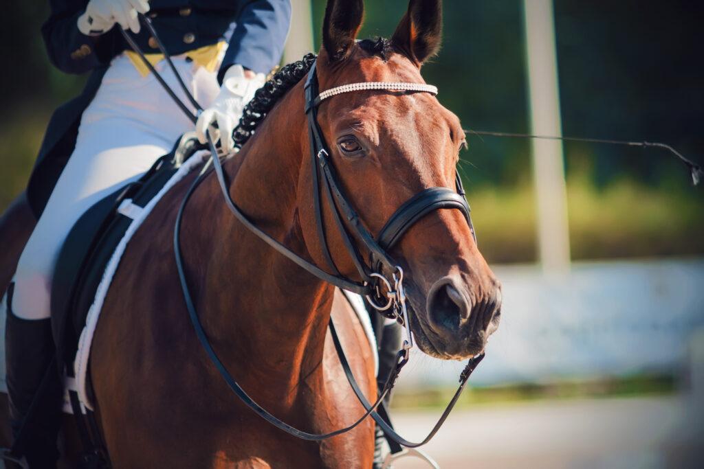 aging performance horse veterinary care senior geriatric