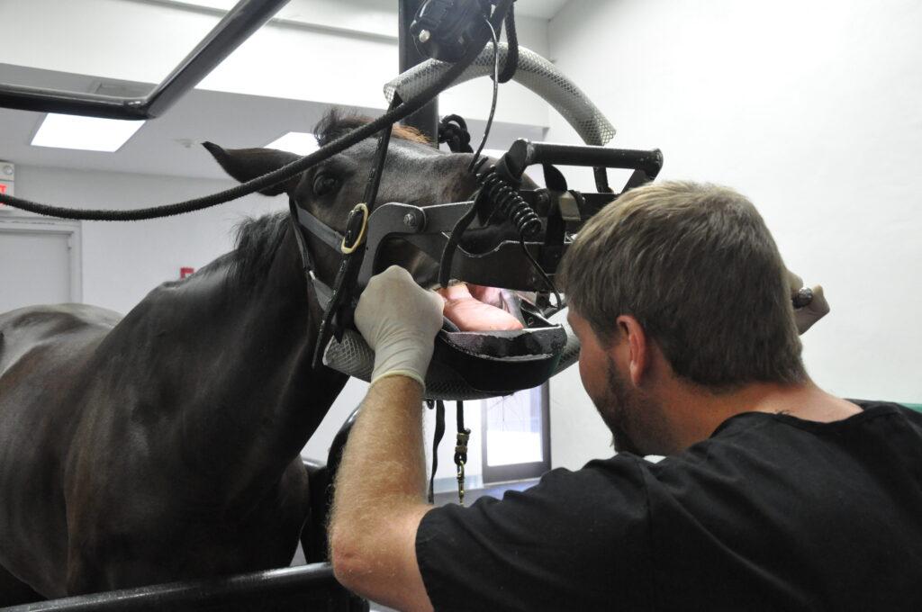 Tyler Davis Equine Dentistry Senior Performance Horse Health