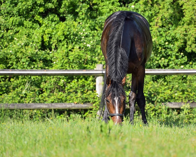 equine nutrition aging performance horse