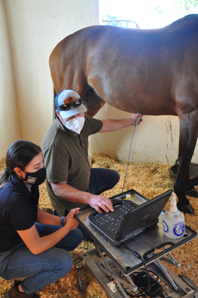 Dr. Peter Heidmann palm beach equine clinic veterinarian internal medicine wellington horse abdominal ultrasound