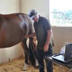 Dr. Peter Heidmann internal medicine veterinarian equine gut microbiome health abdominal ultrasound