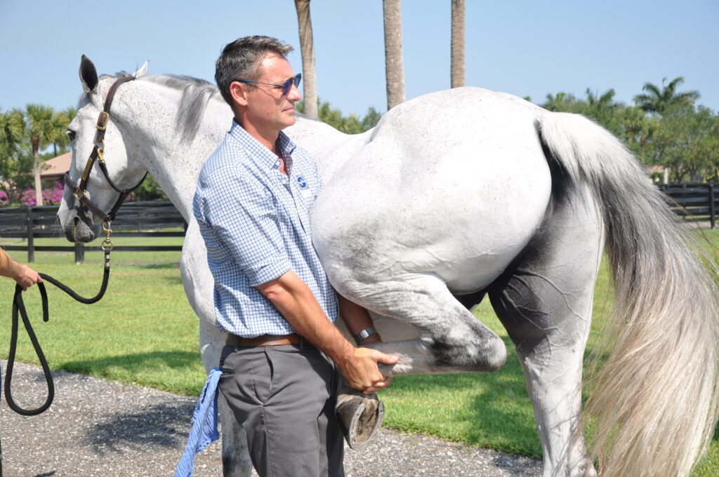 Palm Beach Equine Clinic veterinarian Dr. Bryan Dubynsky performing a flexion on the horse's hind leg