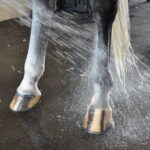 horse being bathed at palm beach equine clinic wet hooves summer hoof health