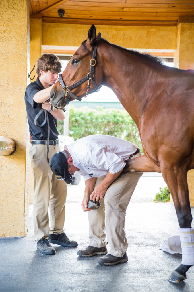 Dr. Bob Brusie examining the leg of a horse - summer hoof health from Dr. Stephen O'Grady at Palm Beach Equine Clinic